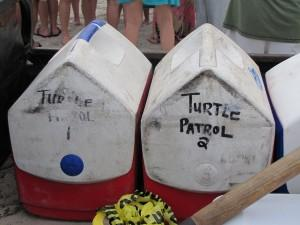 Rescued green and loggerhead sea turtle hatchlings wait to be released.