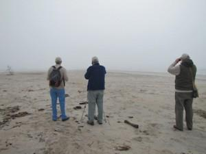 Alan, Bruce and Ed peering through the fog at a group of shorebirds.